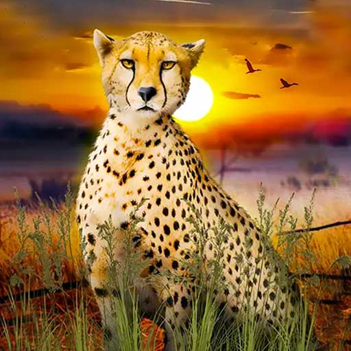 猎豹生存大作战 1.1 安卓版