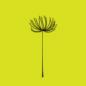 flower.io-热门手游