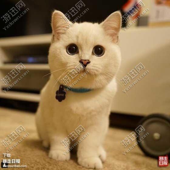 【一只猫超怂的表情】_一只猫超怂的表情抖男朋友音表情包版图片