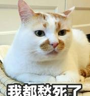 网红猫楼楼表情包