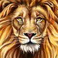 狮子直播深夜版