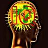 IQWordSearch-益智游戏