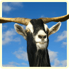 GoatSimulator20163D