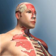 人体模型游戏 1.0 安卓版