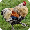 可爱的家禽拼图-游戏