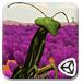 螳螂大战-冒险小游戏