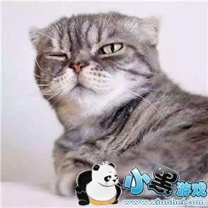 抖音社会猫表情包高清图片大全
