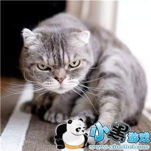 【抖音社会猫表情包大全】社会猫斗图无水印表情包分享图8