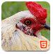 可爱的家禽拼图-益智小游戏