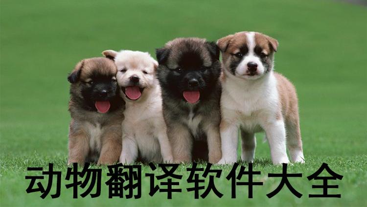 动物翻译软件